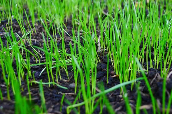 Lawn Growing - Other Lawn Treatment Services by Advance Lawn Service Company, Hartford WI