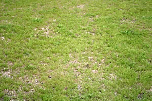 Lawn Needs Overseeding by Advance Lawn Services in Hartford WI