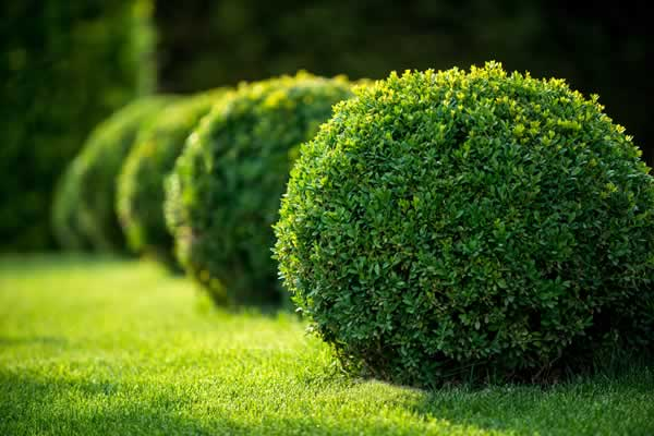 Hedge and Bush Trimming Services by Advance Lawn Services in Hartford WI