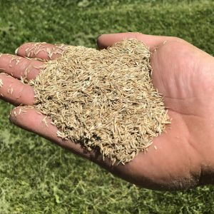 Deluxe Bluegrass Fescue Grass Seed